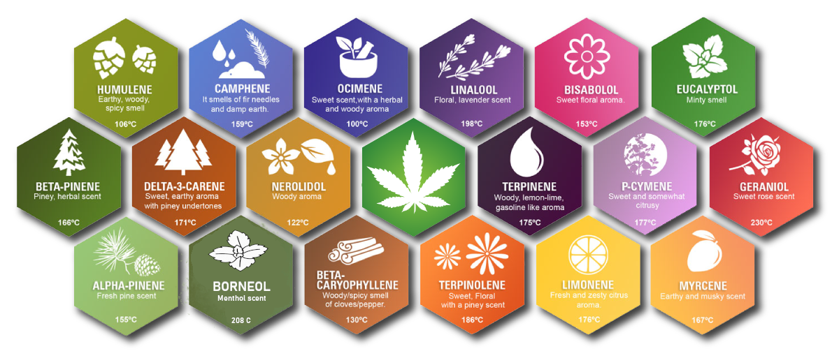 Diagram of Terpenes and their flavor profile