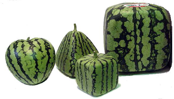 Image result for japan watermelon