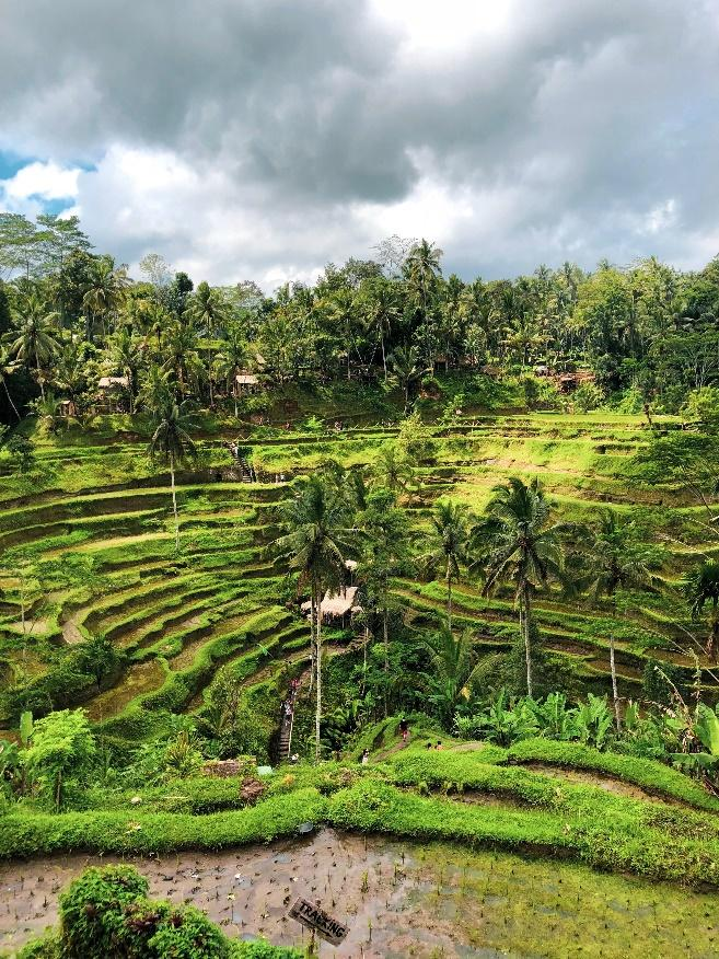 The Tegalalang Rice Terraces