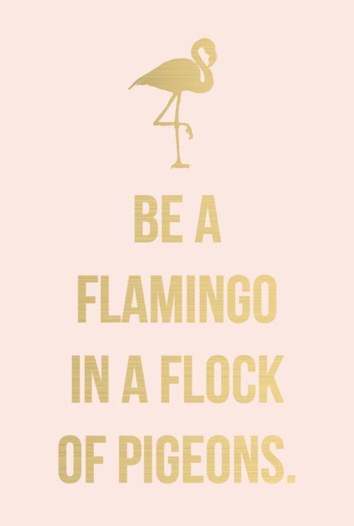 Pink flamingo motivation!: