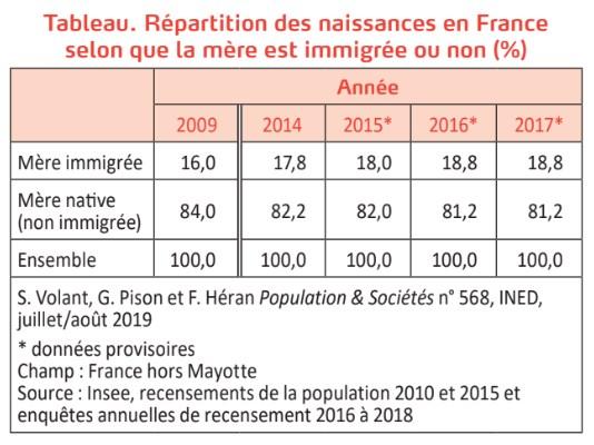 Naissances immigrées Grand Remplacement