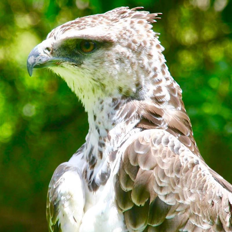 world of birds tourist attractions in south africa