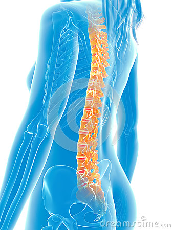 highlighted-spine-d-rendered-medical-illustration-painful-30727873.jpg