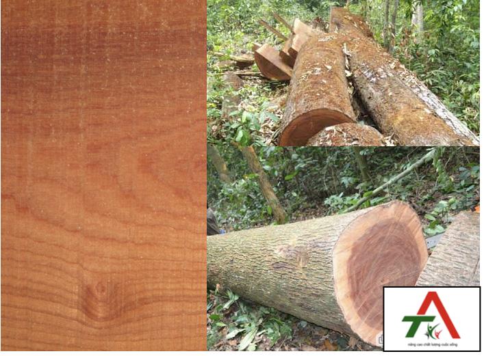 tủ áo gỗ tự nhiên xoan đào