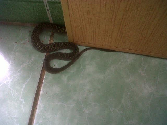 Mơ thấy rắn bò vào nhà là điềm may mắn
