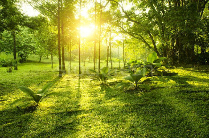 Màu xanh rêu đại diện cho sự sống và ý chí mạnh mẽ