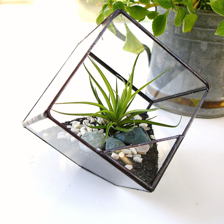 Self Sustaining Terrarium Plant