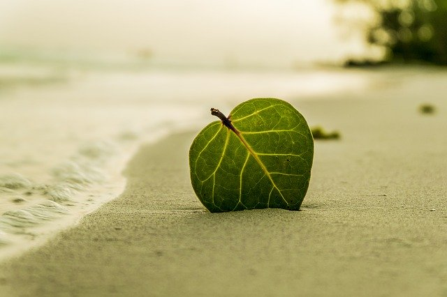 A picture of a single leaf stuck in the sand on a beach is shown in this picture.  You can see the veins in the leaf due to the back lighting of sunlight on the leaf.