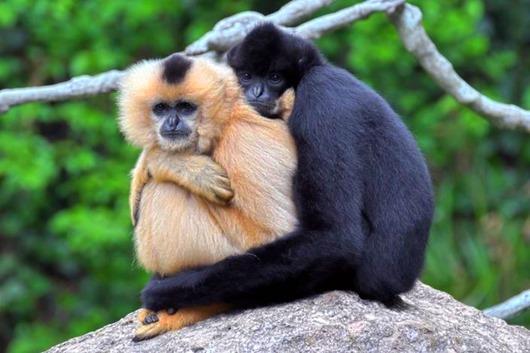 animal love 3