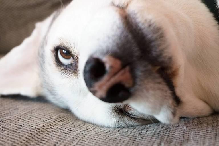 Funny dog face.