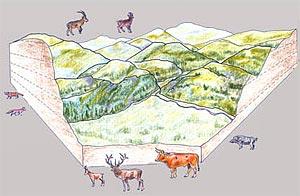 Dibujo de la fauna del Mesolítico. Autor Ignacio Barandiarán