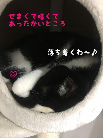 夢のマイホーム!猫と暮らせる家づくりって?