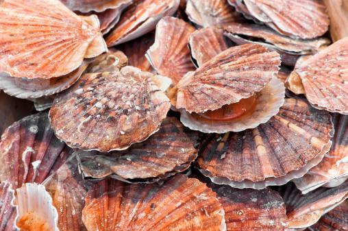 https://media.istockphoto.com/photos/bunch-of-scallops-for-sale-at-a-street-market-picture-id471345877?b=1&k=6&m=471345877&s=170667a&w=0&h=Yk3ykLniW_kAvahFq795O_oUUCx8QzrIMTSmZ7czlSU=