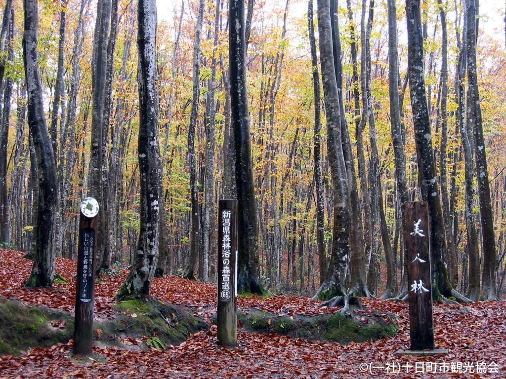 秋季美人林