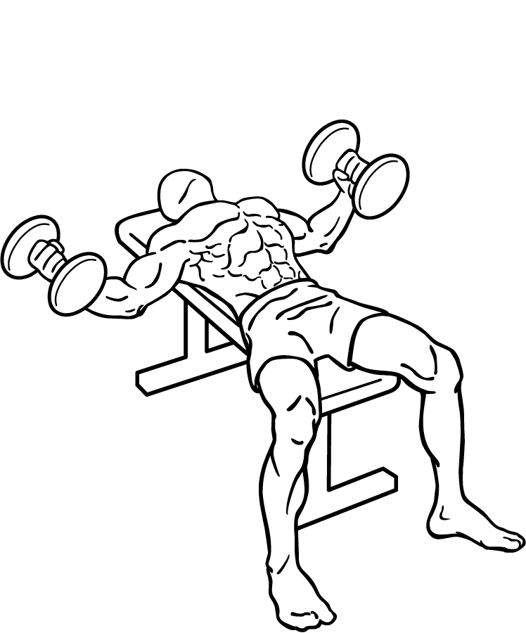 Flat Bench Dumbbell Fly- Chest Workout
