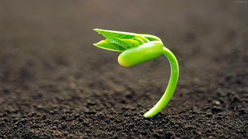 تصویر آماده کردن خاک جهت کشت بذر #1