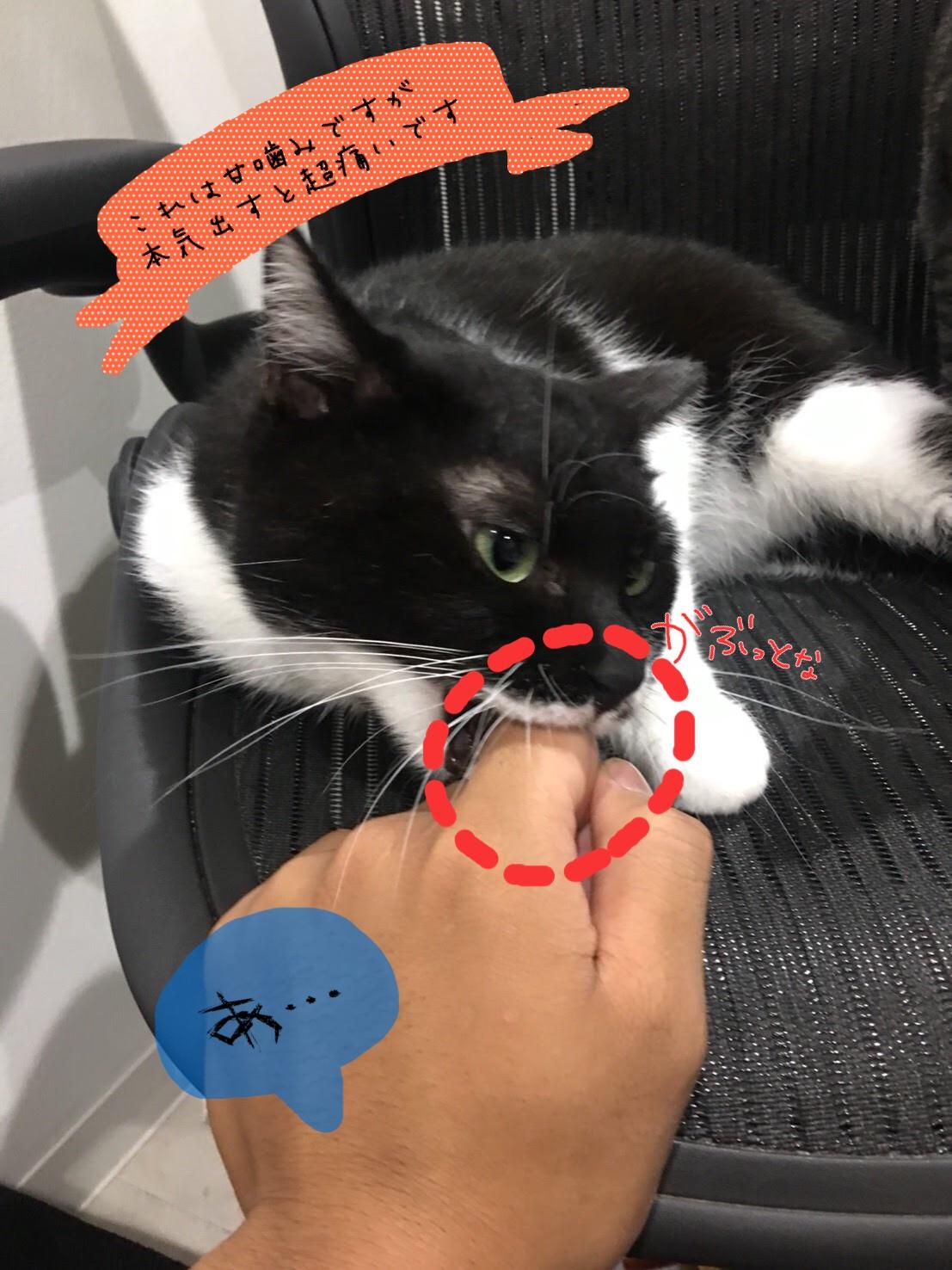 猫が甘噛みする理由~しつけ方法とは~