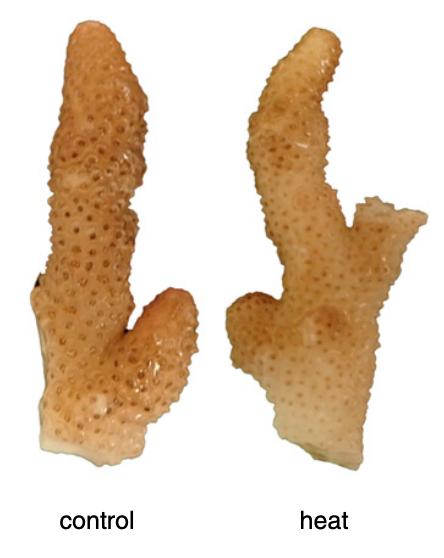 Une image contenant poisson pané  Description générée automatiquement