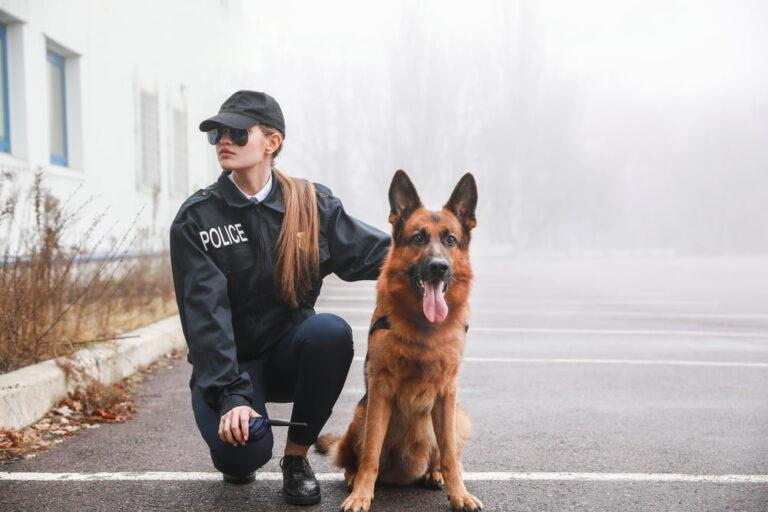 6 Police Dog Breeds That Help Law Enforcement | Great Pet Care jobs for dogs in human territory