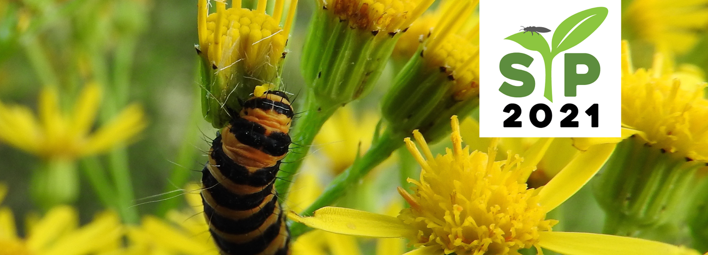 A bee on a flower  Description automatically generated