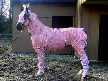 Horse in gift wrap