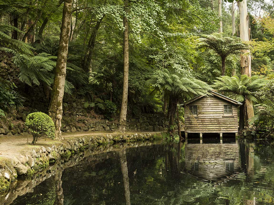 The Dandenong Ranges, Melbourne Backpackers Guide