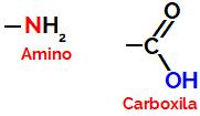 Grupos funcionais carboxila e amino