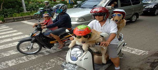Berita Kali ini : Unik Tidak ? Ada Anjing Bisa Naik Motor, Bagikan !