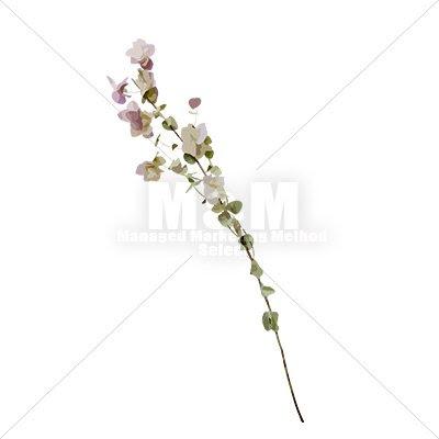イラスト素材花 ドライフラワー オレガノ 1 Mm Collection