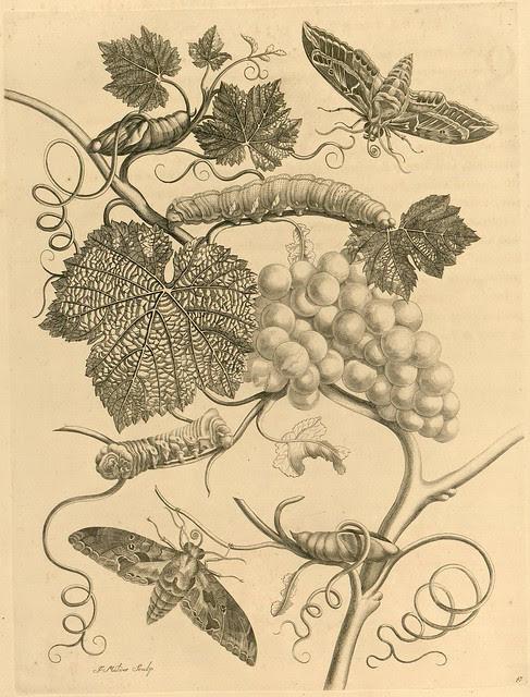 caterpillar and moth book illustrations