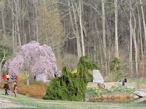 Brookside Gardens Nature Center Birthday