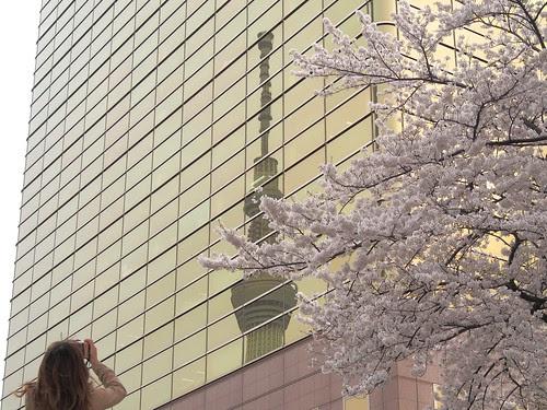 金のスカイツリーと桜