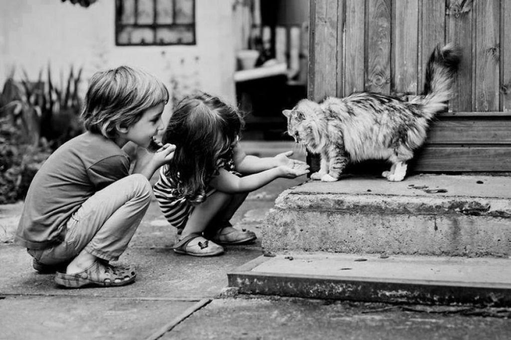 20 crianças brincando com seus gatos que alegrarão o seu dia 19