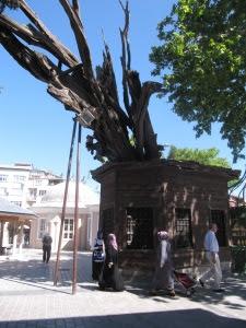 Restos del Ciprés de la Cadena