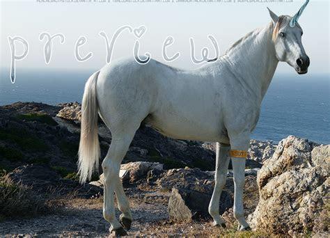 hp unicorn   xsoulstar  deviantart