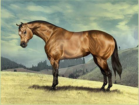 american quarter horse wallpaper wallpapersafari