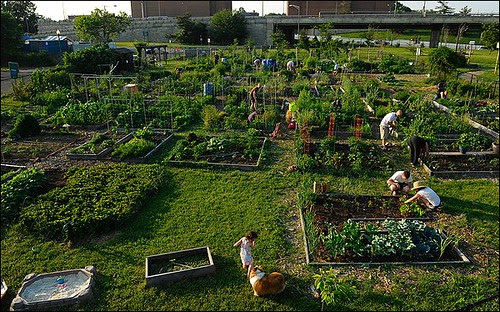 Residents work on their private plots at the Virginia Avenue Community Garden, which is under consideration as a site for a Marine Corps barracks.