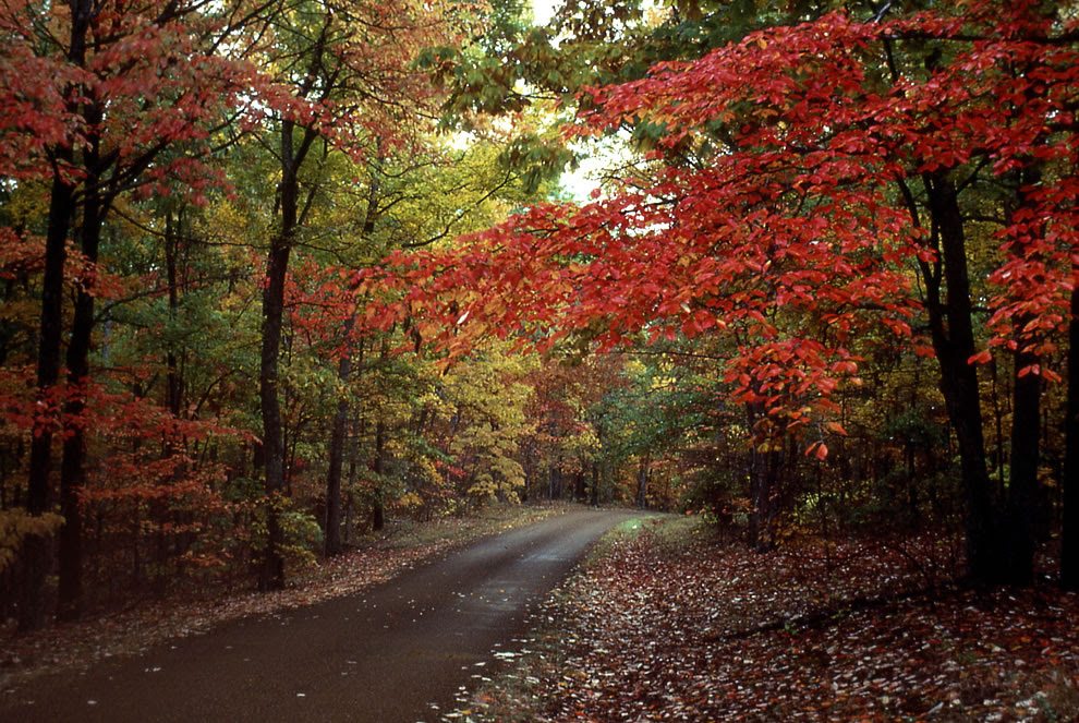 Mississippi Natchez Trace Parkway fall foliage