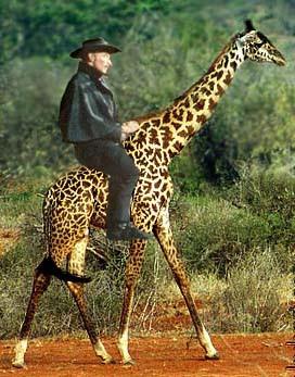 LeeVanCleef-Giraffe