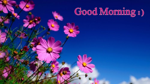 38 Good Morning Flower Images For Free Download Hd Pics