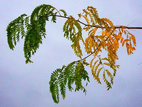 Leafy gradient