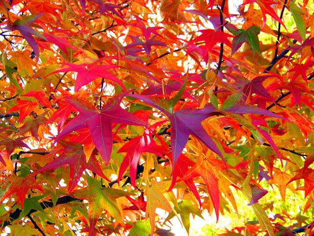 Podzimní brigáda