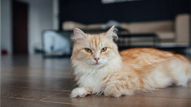 Cat on domestic floor