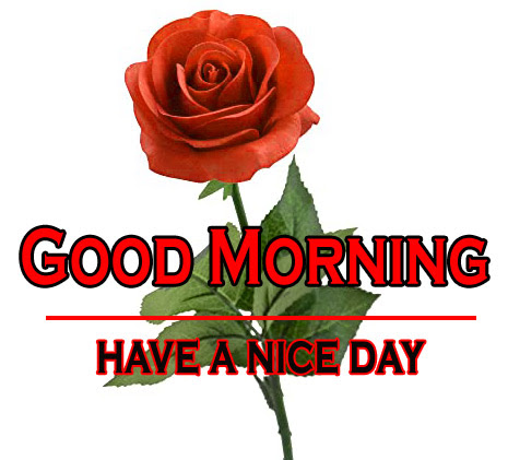 Morning Wishes Images With Red Rose 2