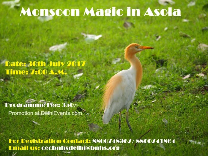 BNHS CEC-Delhi Monsoon Magic Asola Bhatti Wildlife Sanctuary Creative
