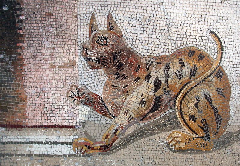 Ancient Rome: ~1000 B.C. Carried to Rome from Phoenicia, cats were introduced as mousers, and were valued for their hunting prowess, often tolerated for keeping rodent population at bay. Roman soldiers transported cats on conquests to keep grain...