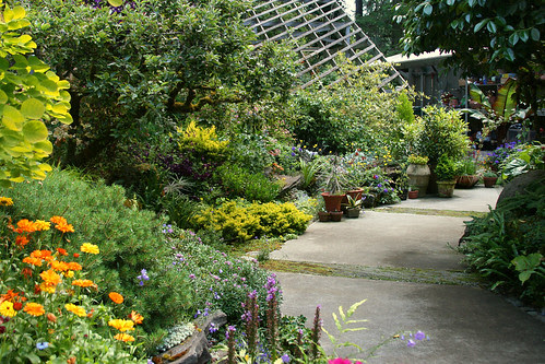 back garden and greenhouse