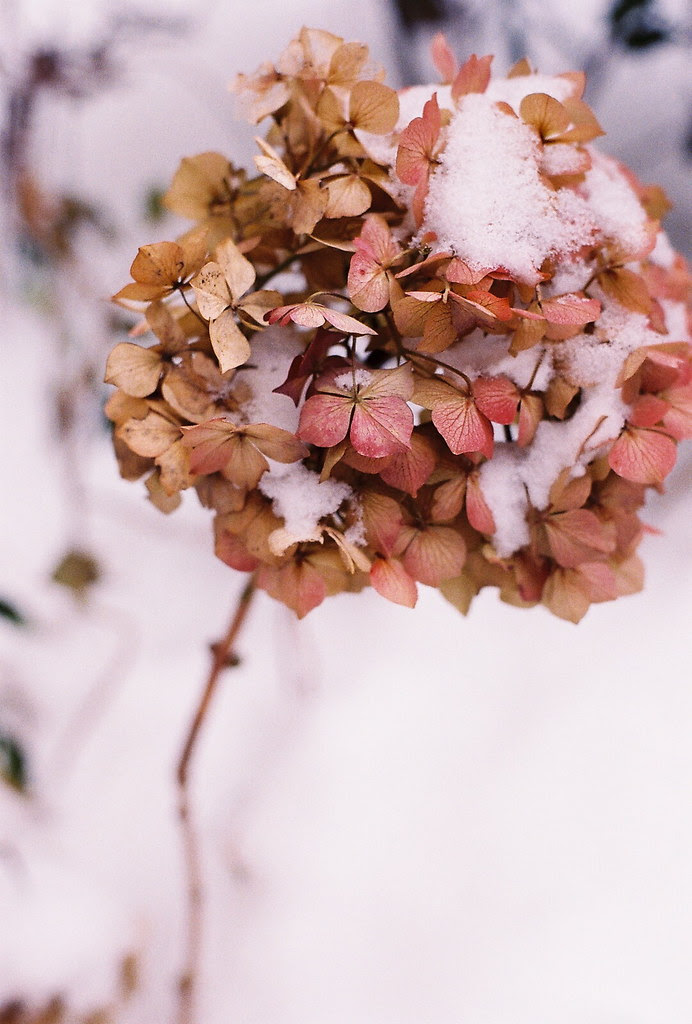 the pretty side of snow