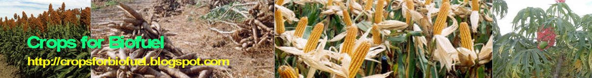 Crops for Biofuel