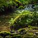 Silberbachtal # 3 - Bach, moosige Felsen und Farn im Gegenlicht  - Creek, mossy rocks, fern